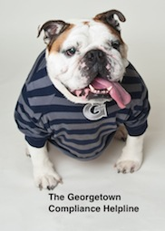 Jack the Bulldog in a Georgetown striped shirt