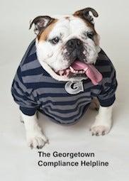 Jack the Bulldog in a Georgetown striped shirt